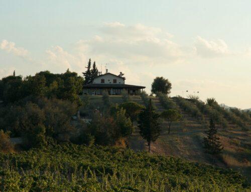 Bianco delle Volture dell'Azienda Agricola Fiorentini Vini