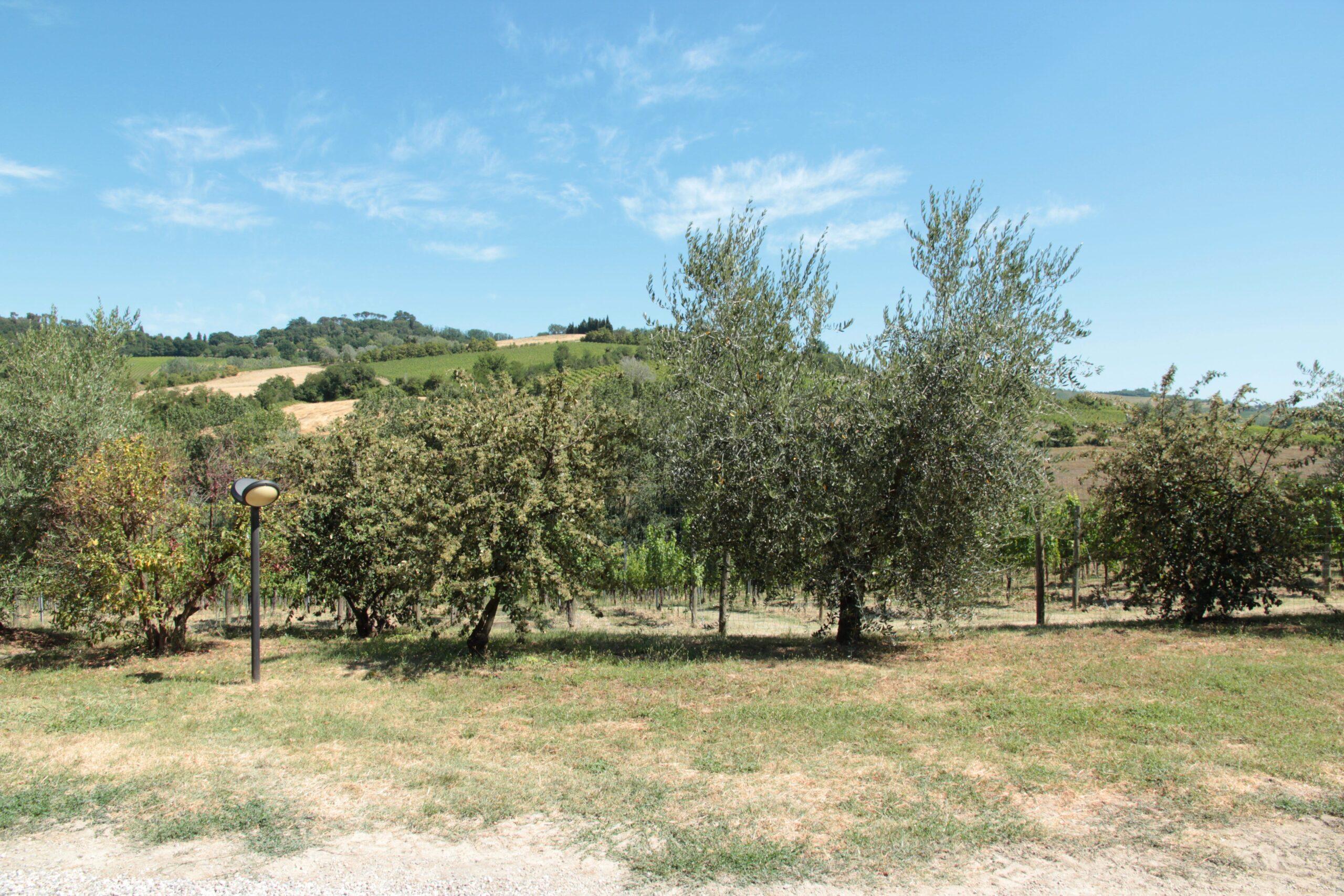 colline imolesi dell'azienda agricola Tre Monti
